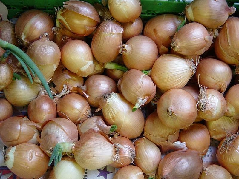 Makó Onion