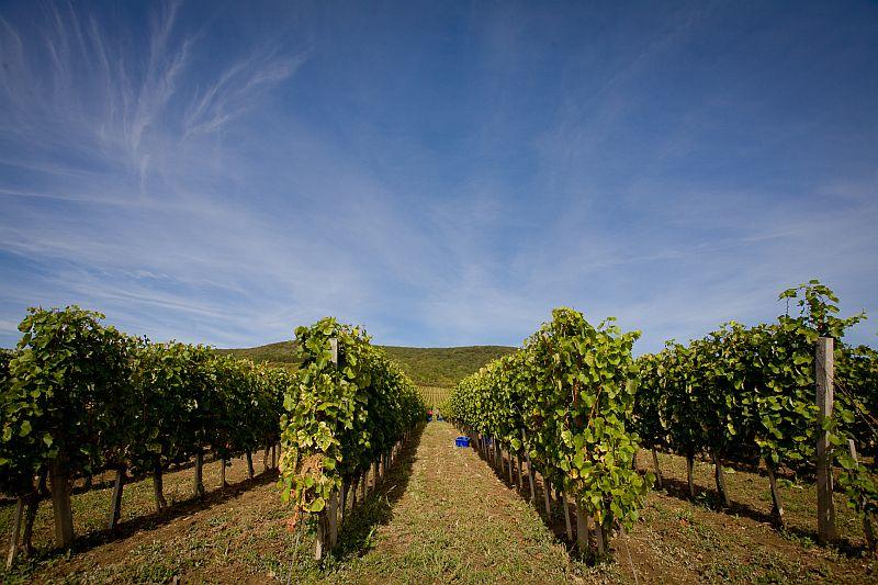 Tokaj-Hegyalja wine region
